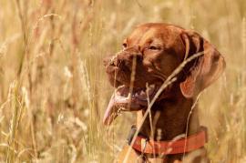 fotograf hund