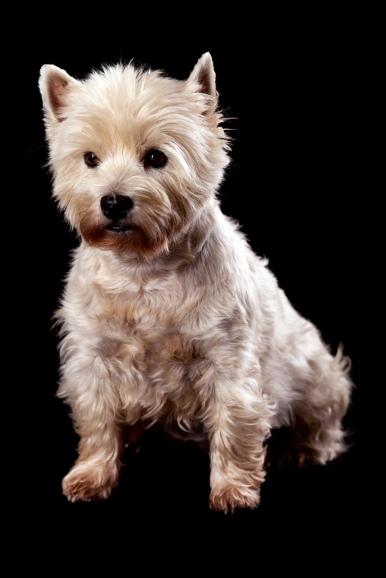 fotograf hunde haderslev